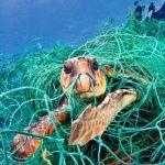 Rác thải nhựa ảnh hưởng đến môi trường