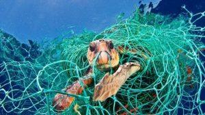 rác thải nhựa giết sinh vật biển